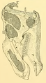 The Osteology of the Reptiles-105 d34567ytyy f.png