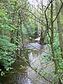 The River Clwyd at Nantclwyd - geograph.org.uk - 1310266.jpg