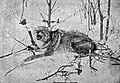 The Science of Trapping (1909) Coyote.jpg