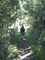 The Thames Path near Shillingford - geograph.org.uk - 948388.jpg
