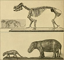The age of mammals in Europe, Asia and North America (1910) (17757255360).jpg