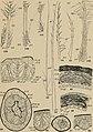 The development of nestling feathers (1907) (20703341218).jpg