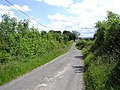 The road at Glacken's Wood - geograph.org.uk - 192968.jpg