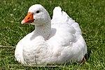 There's Goose, where's Maverick? (19559670391).jpg