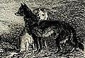 Tolderío 1827 Perros Fueguinos.jpg
