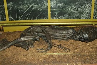 Tollund Man - Tollund Man on display at Silkeborg Museum
