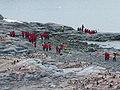 Tourism in Antarctica (Cuverville island).jpg