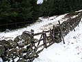 Tracks and wall, Glentress Forest - geograph.org.uk - 129947.jpg