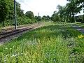 Trackside flowers on Tramlink (geograph 2526125).jpg