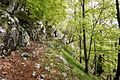 Trail in forest Slovenia 4.jpg