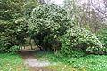 Treblitzsch Landschaftspark Jap Lavendelheide.jpg