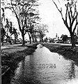 Tree-lined street with water running through it (4290353531).jpg