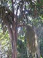 Tree YAAM 2.jpg
