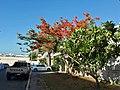 Tree bypass.jpg