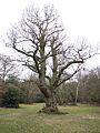 Tree in clearing (6958315880).jpg