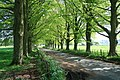 Tree lined lane at Asthall - geograph.org.uk - 791008.jpg
