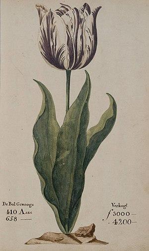 Tulip mania - Image: Tulipomania