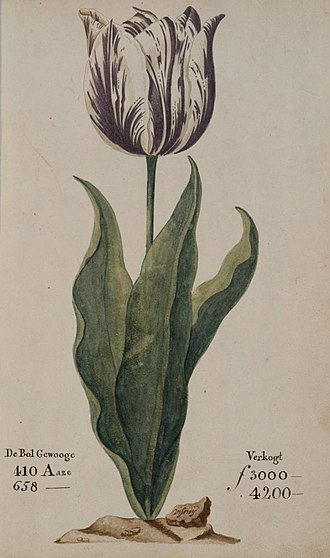 "Tulip mania - A tulip, known as ""the Viceroy"" (viseroij), displayed in the 1637 Dutch catalog Verzameling van een Meenigte Tulipaanen. Its bulb was offered for sale for between 3,000 and 4,200 guilders (florins) depending on size (aase). A skilled craftsworker at the time earned about 300 guilders a year."