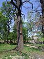 Turbiv park 12.jpg