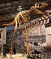 Tyrannosaurus Jane.jpg