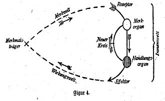 "Jakob von Uexküll - ""Early Scheme for a circular Feedback Circle"" from Theoretische Biologie 1920."