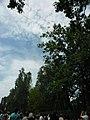 Ukraine. August 2012. Forest Vodice. - panoramio (2).jpg