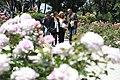 Una rosa alemana gana el concurso internacional 'Villa de Madrid' 03.jpg