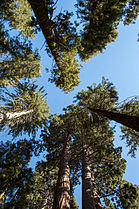 United States - California - Sequoia National Park - 14.jpg