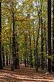 Unterlamm Herbstwald 20181026 01.jpg
