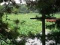 VM Yuanmingyuan Lotus pond 4444.jpg