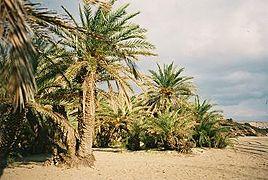 Vai Palm Beach, Crete, Kriti.jpg