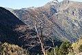 Vall de Sorteny (Ordino) - 8.jpg