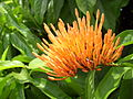 Vallish Flower.jpg