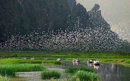 Danh sách các loài chim ở Việt Nam