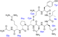 Vasotocin with labels.png