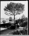 Veduta dell'Anfiteatro Flavio o Colosseo dai giardini di Villa Mills sul Palatino.jpg