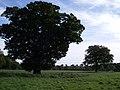 Veteran oak at Star Stile - geograph.org.uk - 263066.jpg
