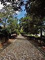 Viale alberato per villa pallavicini.JPG