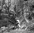 View in Ballaglass Glen - geograph.org.uk - 513612.jpg