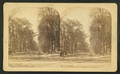 View of a street, from Robert N. Dennis collection of stereoscopic views.png
