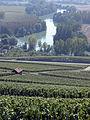 Vigne Pinot noir (Vue sur la Marne) Cl.J.Weber01 (23569147642).jpg