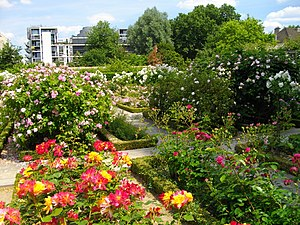 English: Garden with roses Français : Jardin a...