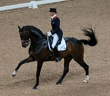 A dark brown horse ridden English-style by a person wearing a top hat, dark riding coat and white breeches