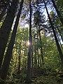 Wald im Kirkeler Bachtal.jpg