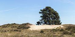 Wandeling over het Hulshorsterzand-Hulshorsterheide 04.jpg