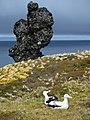 Wandering albatros and volcanic structure - panoramio.jpg