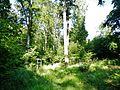 Wanderweg - panoramio (23).jpg