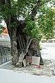 Wat Suwannaram tree.jpg