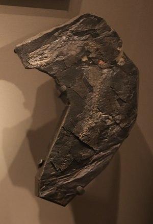 Westlothiana - Type specimen of Westlothiana lizziae