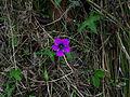 Whf purple 38.jpg